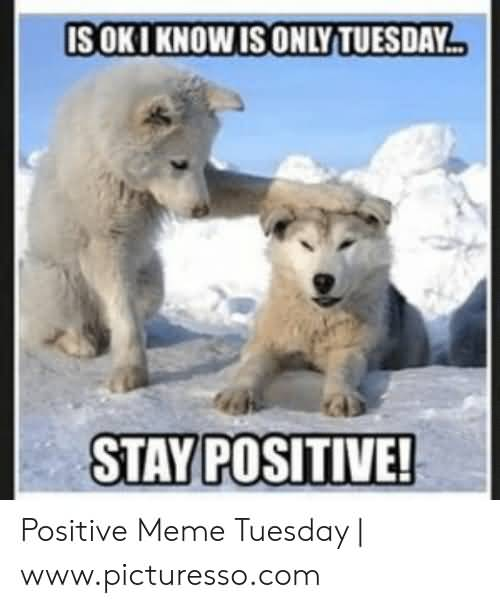 22 Tuesday Meme Positive Images & Jokes - Picss Mine