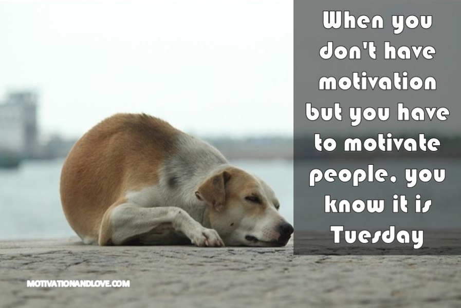 22 Tuesday Motivation Meme Funny Jokes Images - Picss Mine